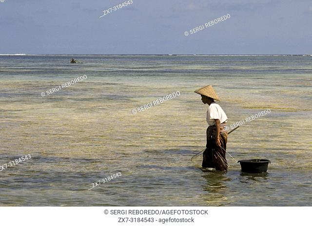 Women often walk along the shore of Kuta beach, a fisherman south of Lombok, looking for seaweed, which is prized for cooking. Kuta Lombok Indonesia