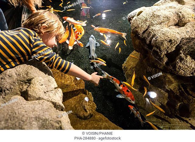 Boy watching koi carps in a pool
