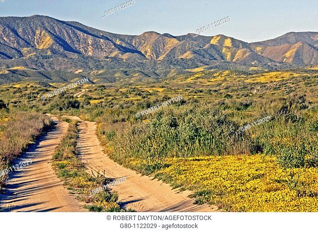 A road in the Carrizo Plain, Southern California