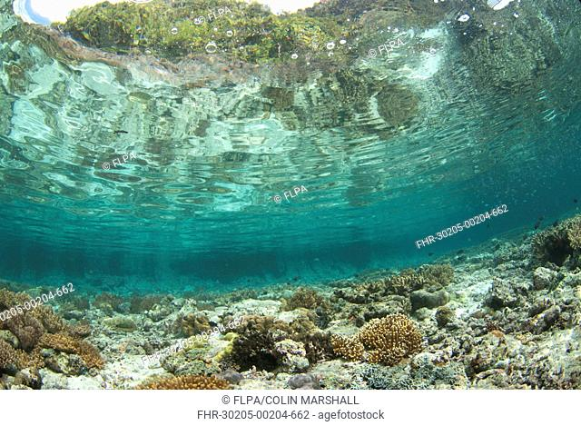 View of coral reef habitat in shallows, Potato Point, Fiabacet Island, West Papua, New Guinea, Indonesia