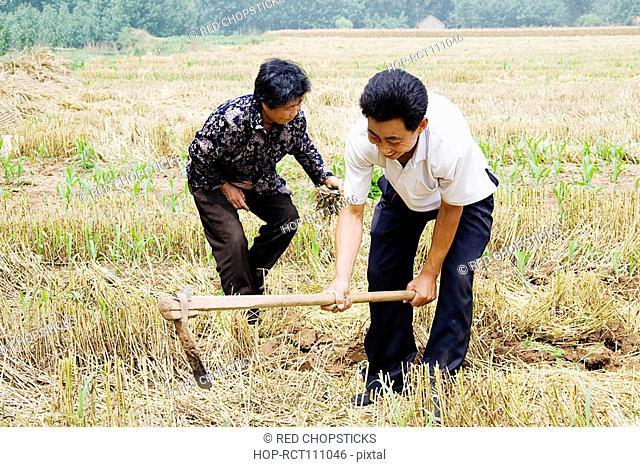 Farmers working in a field, Zhigou, Shandong Province, China
