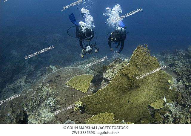 Woman diver photographer (model released) and diver over broken large Table Coral (Acropora clathrata, Acroporidae family), Lava flow dive site