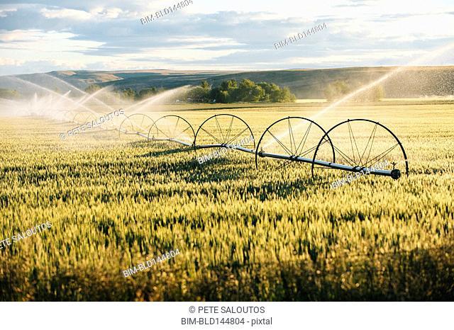 Irrigation system watering crops on farm field