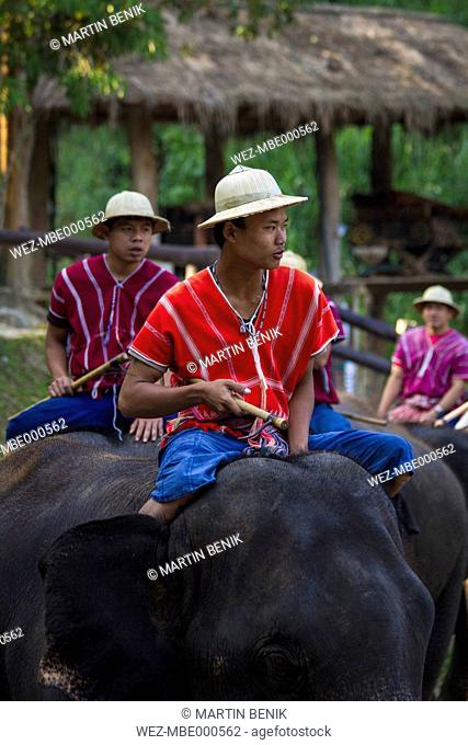 Thailand, Chiang Mai, Elephant show with mahout at Maesa Elephant Camp