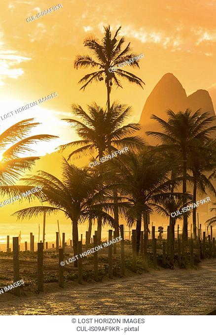 Palm trees at sunset on Ipanema beach, Rio De Janeiro, Brazil