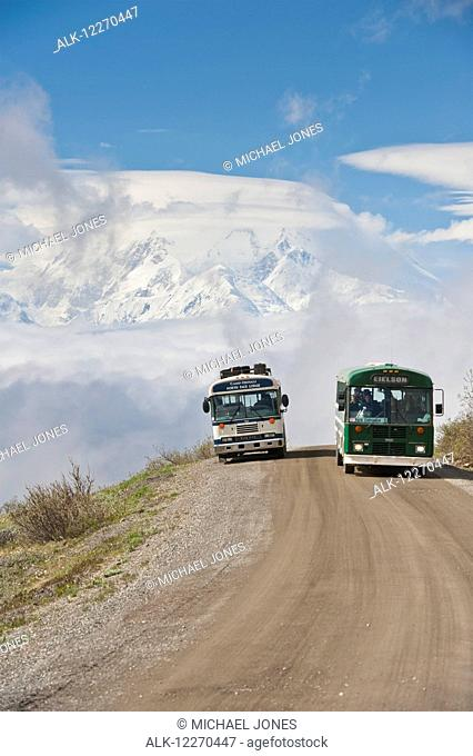 Two Tour buses pass each other on the Park Road in Denali National Park with Mt. McKinley in the background, Interior Alaska, Summer