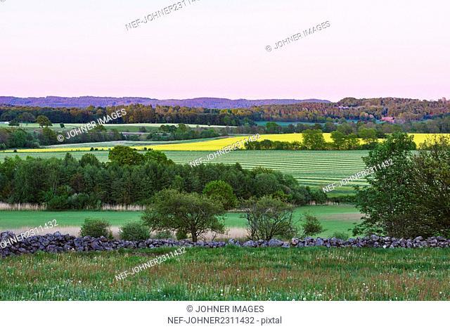 Green landscape at sunset