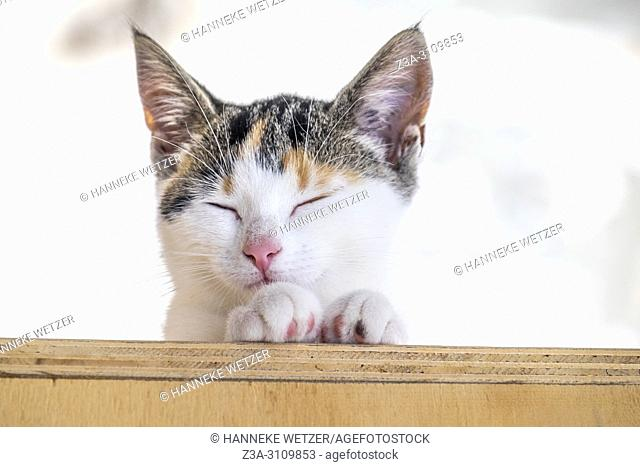 Portrait of a cute kitten high uo on a wooden object