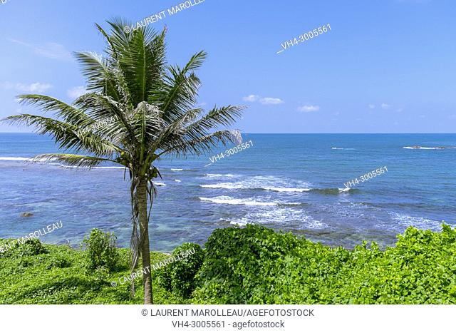 Coconut Palm Tree with the Sea in the background, Old Town of Galle and its Fortifications, Southern Province, Sri Lanka, Asia