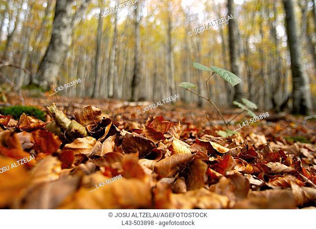 Fallen leaves, autumn