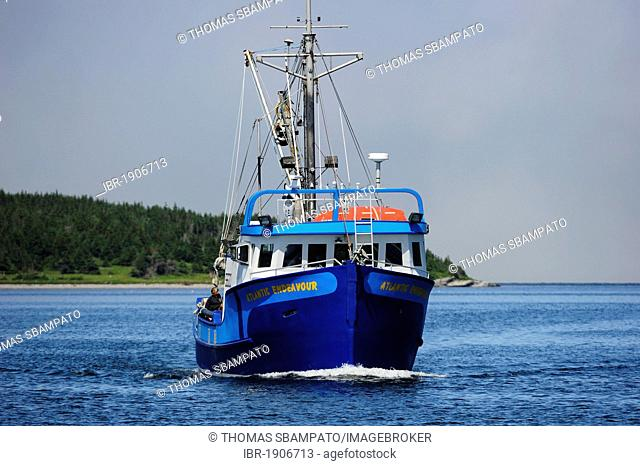 Fishing boat entering the harbor, Newfoundland, Canada, North America
