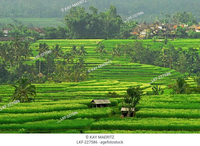 View at deserted rice terraces under cloudy sky, Central Bali, Indonesia, Asia