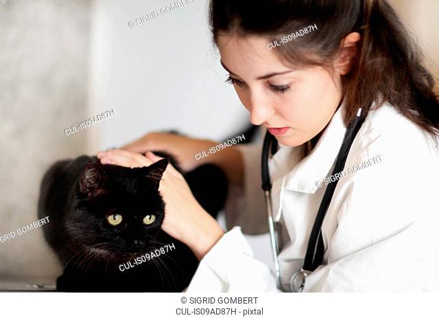 Veterinarian examining black cat