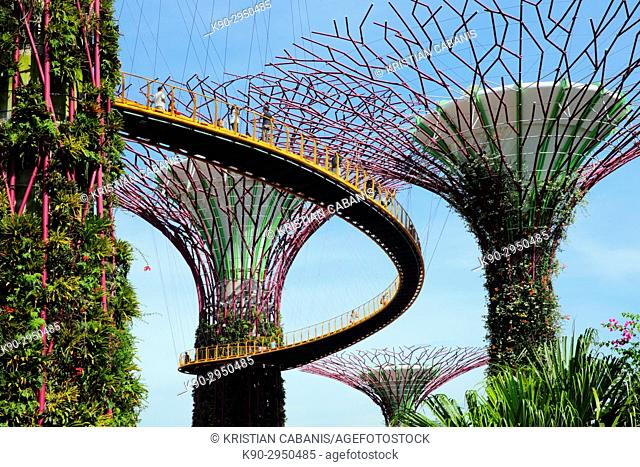 People walking along the skywalk that connects the iconic tree-like vertical gardens with large canopies, Supertree Grove, Botanic Garden, Garden by the bay