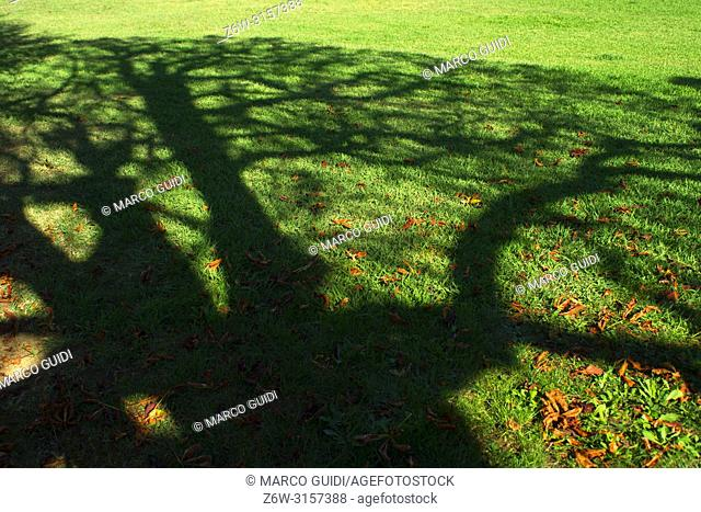 Shadow of a tree on a meadow in the fall season