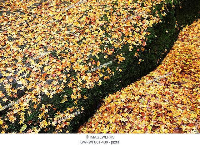 Japan, Kinki, Mie, Autumn leaves, elevated view