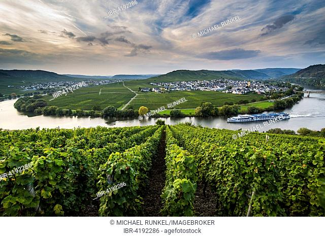 Cruiseship shipping between the vineyards around the Moselle, Trittenheim, Moselle Valley, Rhineland-Palatinate, Germany