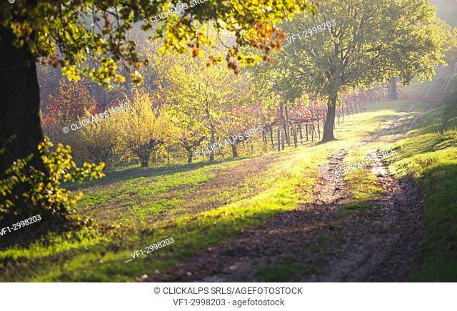 Levizzano Rangone, Modena Province, Emilia Romagna, Italy
