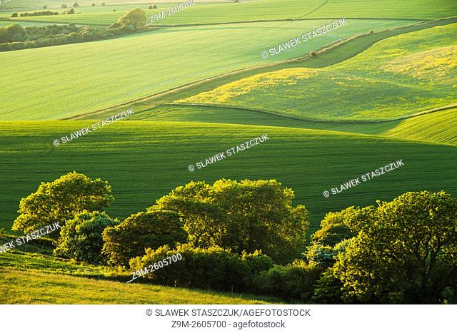 Spring evening in South Downs National Park near Storrington, West Sussex, England
