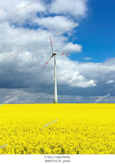 single wind generator in yellow rape field, Bavaria, Germany, Europe