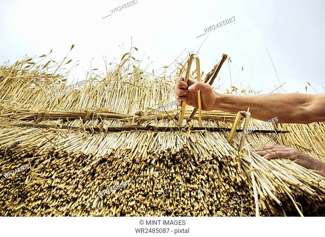 Man thatching a roof, inserting hazel wood spars to fasten the straw