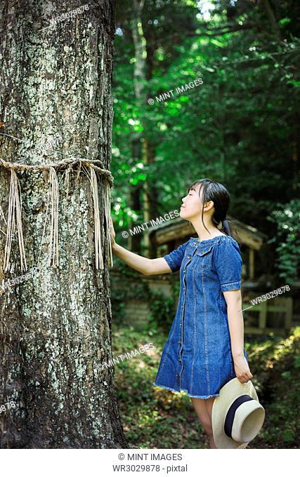 Young woman wearing blue dress touching shimenawa ropes on tree at Shinto Sakurai Shrine, Fukuoka, Japan