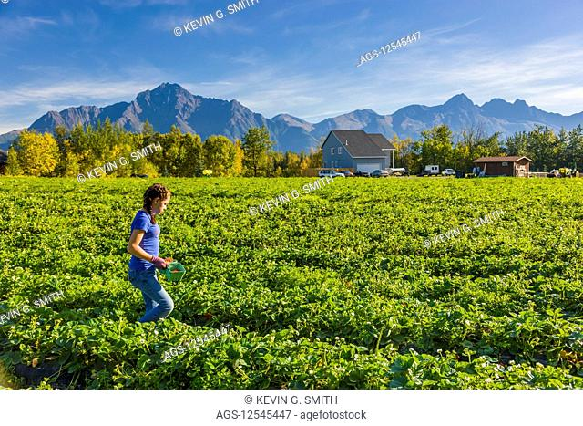 A young woman walks through a field of strawberry plants on a farm with Pioneer Peak, Goat Mountain and Twin Peaks in the background