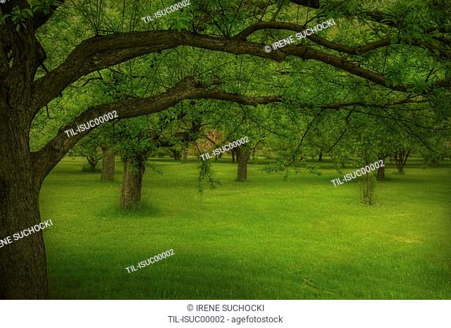Green grass under a canopy of trees
