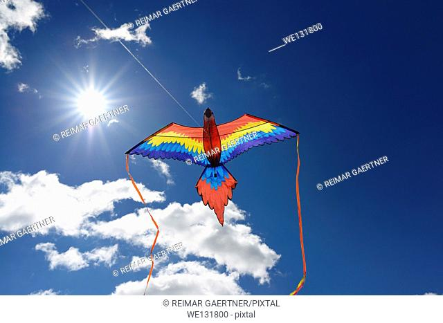 Macaw Parrot Kite flying against the sun with a blue sky in Toronto