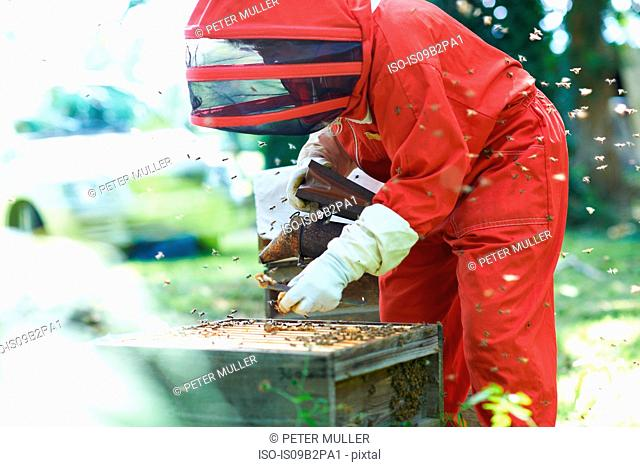 Beekeeper at hive, surrounded by bees