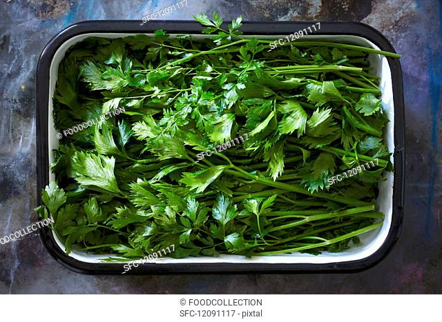 Fresh parsley in an enamel dish