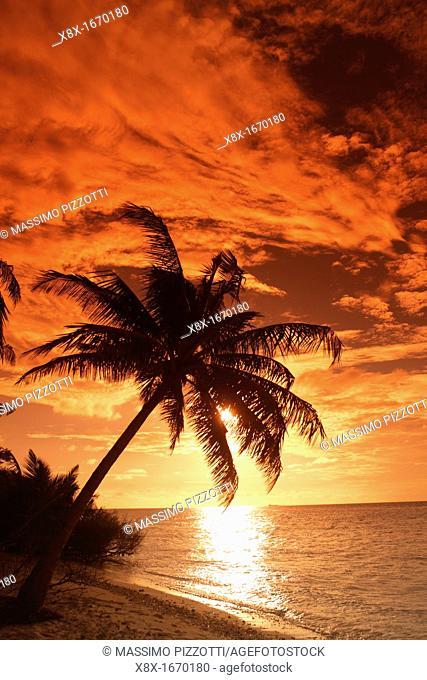Palms om the beach at sunset, Filitheyo island, Maldives