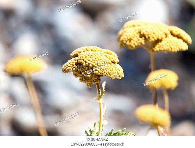 yellow flower on the wild