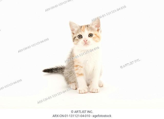 A sittiing kitten
