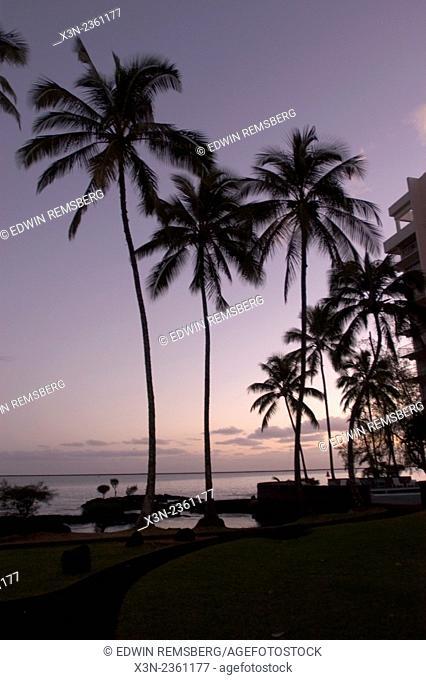 Hawaii USA - Palm Trees on beach in Hawaii at Sunset