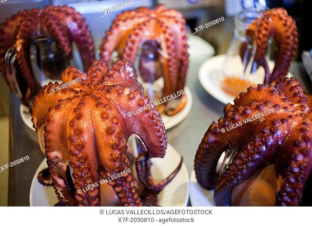 Octopus for 'Pulpo a feira' octopus in Galician style, Pulpería María Pita, En Plaza María Pita 20, Coruña city, Galicia, Spain