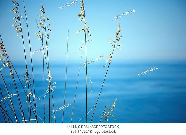 Mediterranean, Balearic Islands, Minorca