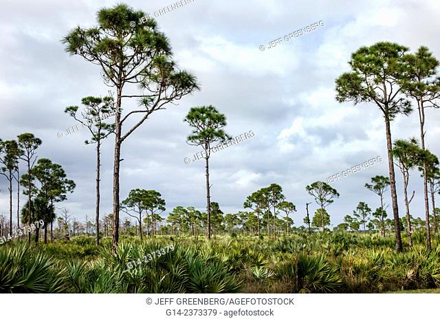 Florida, Port Saint St. Lucie, Savannas Preserve State Park, Slash Pine trees, flatwoods, basin marsh, scrubby flatwoods, wet prairie, Atlantic scrub ridge