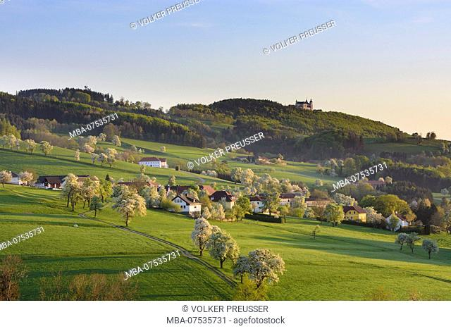 Sonntagberg, view from Allhartsberg to basilica Sonntagberg, blossoming pear trees, hill, meadow, farm houses in Austria, Lower Austria (Niederösterreich)