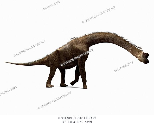 Brachiosaurus dinosaur, computer artwork. This is the tallest known dinosaur, standing up to 16 metres tall. It lived during the late Jurassic period