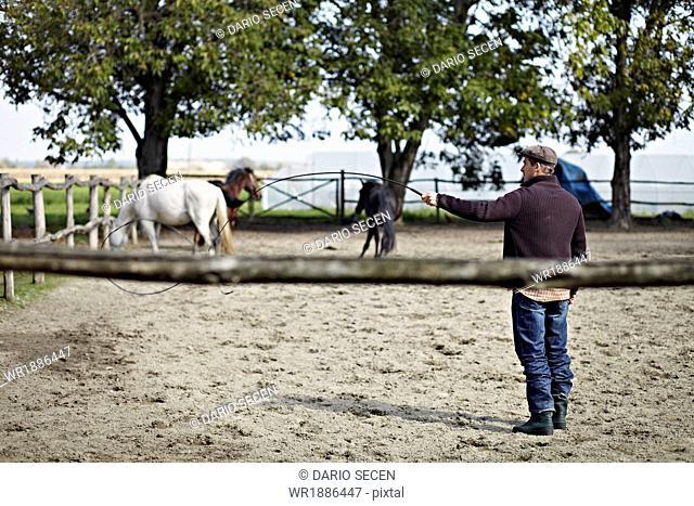 Man Holding Whip In Paddock, Baranja, Croatia, Europe