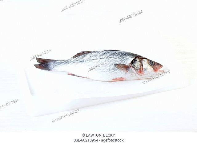 Raw sea bass on a white background