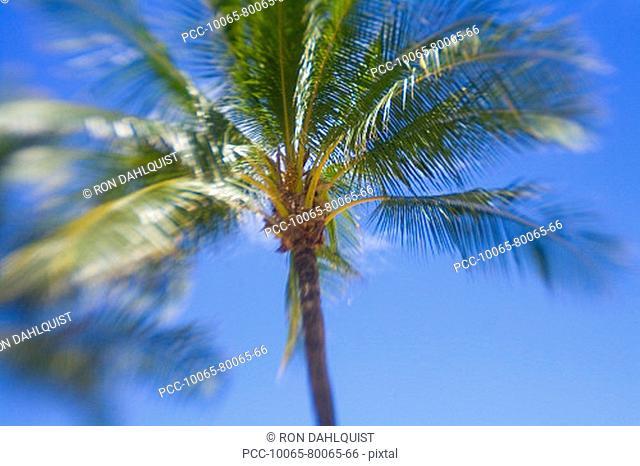 Hawaii, Palm tree with blur around edges