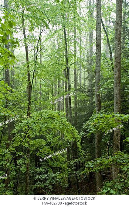 Early Spring at Pisgah National Forest, North Carolina