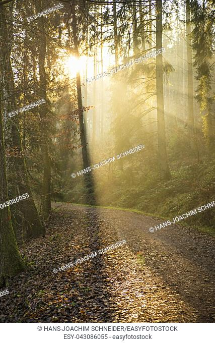 sun rays in a forest in Germany