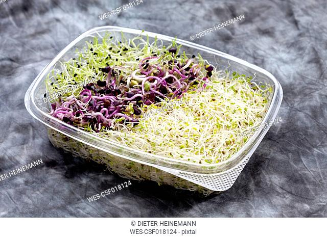 Mixed sprouts, alfalfa, onions, radish in container, close up