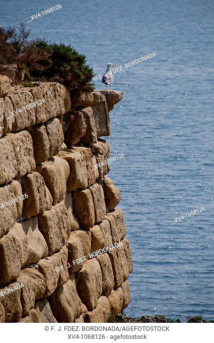 Tabarca island  Alicante  Spain