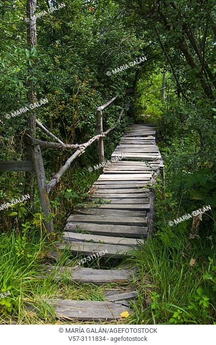Old wooden footbridge in a forest