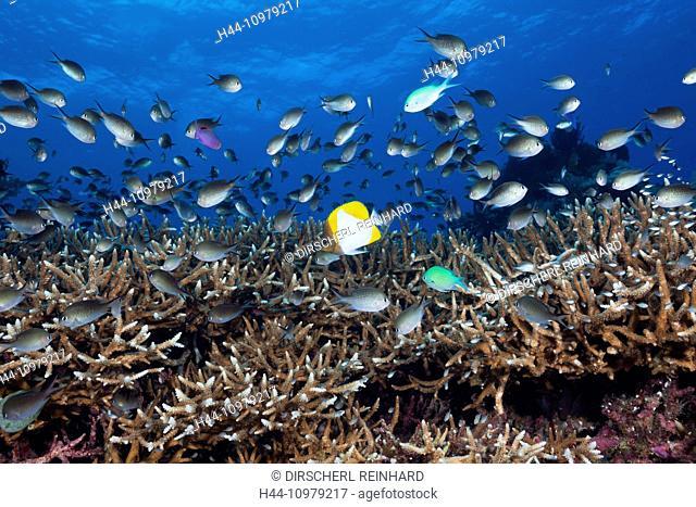 Kai Islands, Moluccas, Indonesia