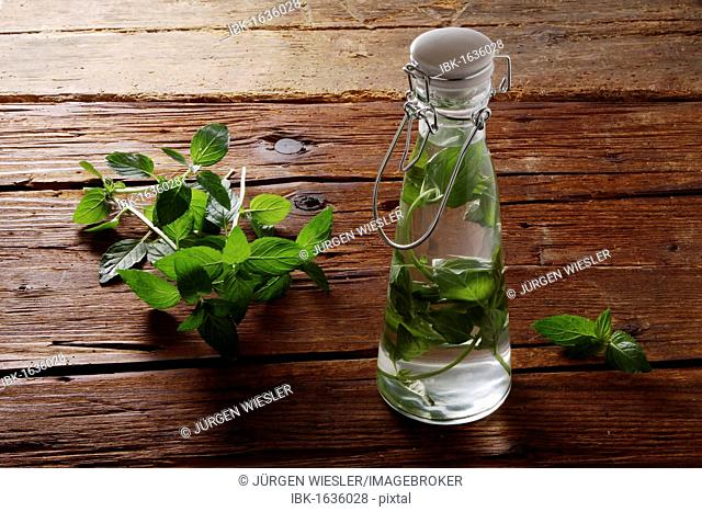 Pepperming leaves (Mentha piperita), preparation for making medicine or liquor, on a rustic wooden underground